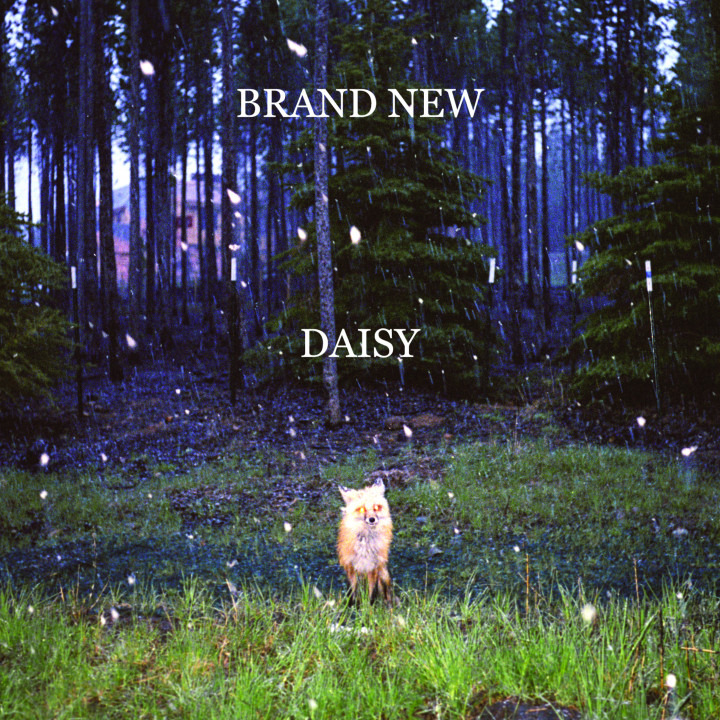 Brand New Daisy Cover