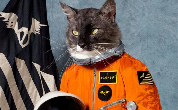 Klaxons, Mit der Katze durchs Weltall