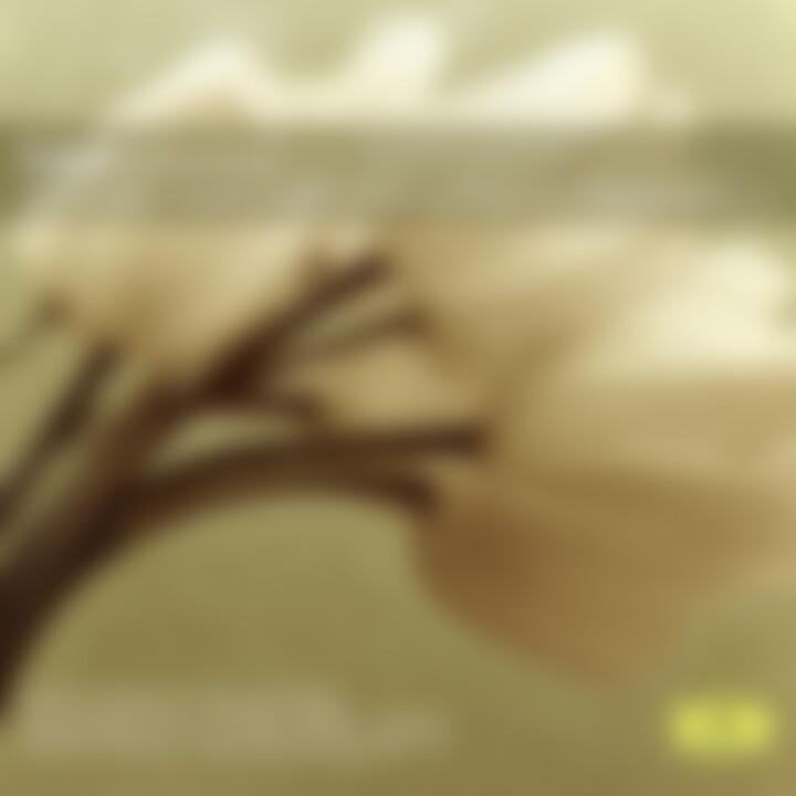 Liszt Liebestraum: Argerich/Arrau/Barenboim/+