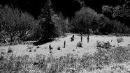 Feist, Graveyard