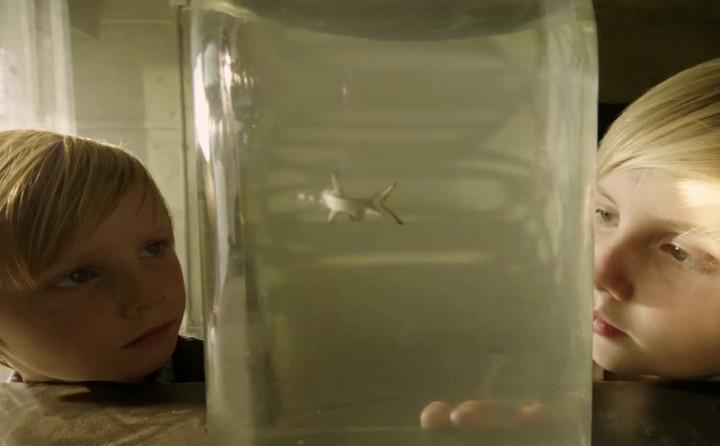 Trailer zu Hai-Alarm am Müggelsee