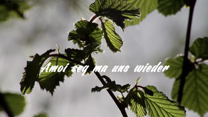 Amoi seg' ma uns wieder (Lyric Video)