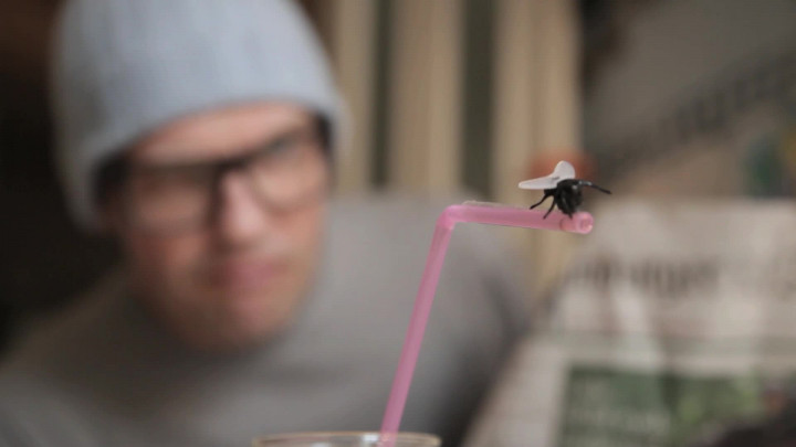 Die freche Fliege