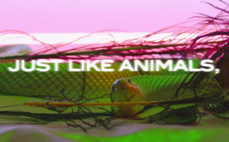 Maroon 5, Animals (Lyric Video)