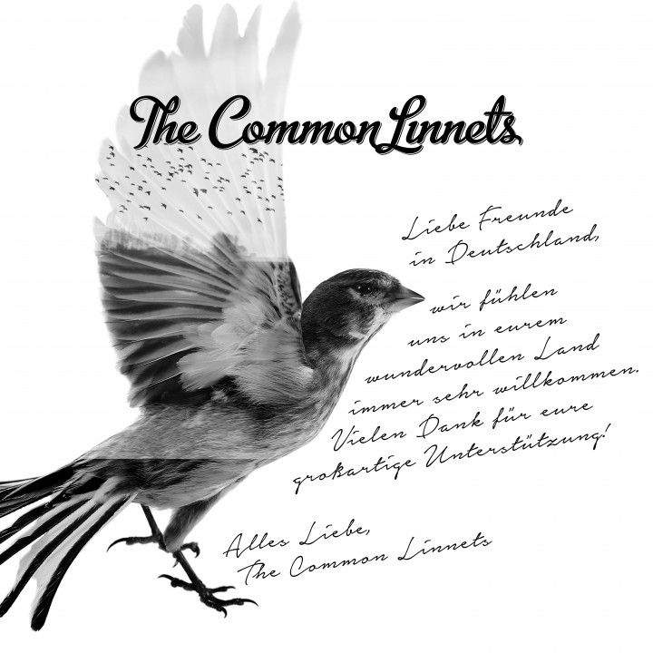 The Common Linnets Cover Special Version