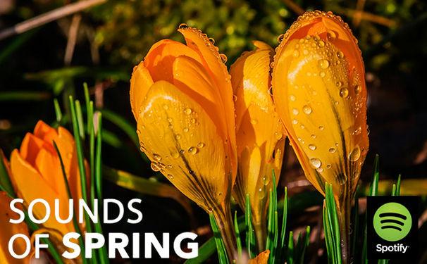Diverse Künstler, Klassische Musik für den Frühling - Sounds of Spring Playlist auf Spotify