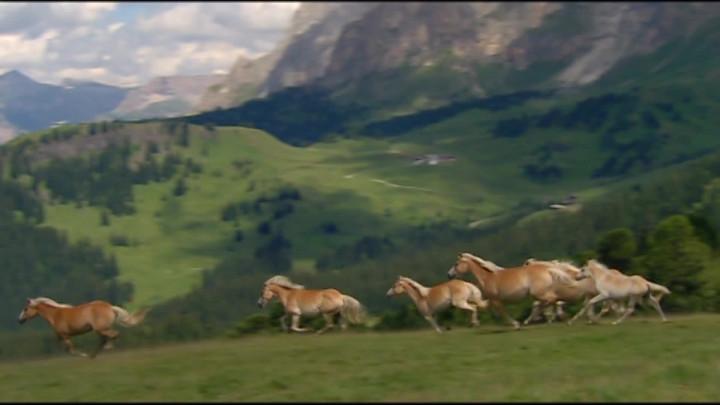 Eine Herde stolzer Pferde