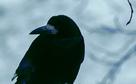 Halsey, Badlands (Trailer)