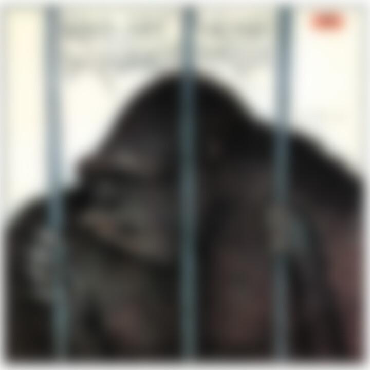 Vorsicht Gorilla