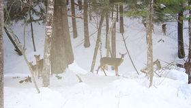 Tori Amos, Tori Amos - Reindeer King