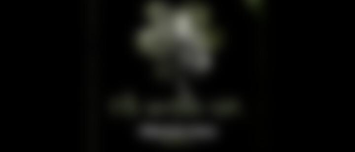 Die Weisse Lilie – 02: Tödliche Stille – Kapitel II (Hörprobe)
