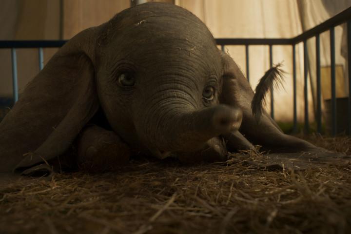 Dumbo Newsbild Kinochartplazierung