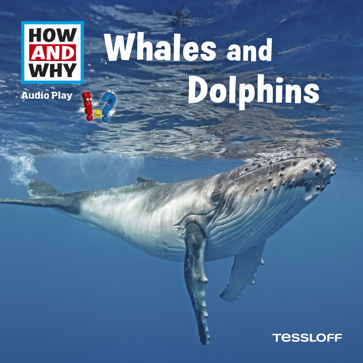 whales and dolphins - how and why