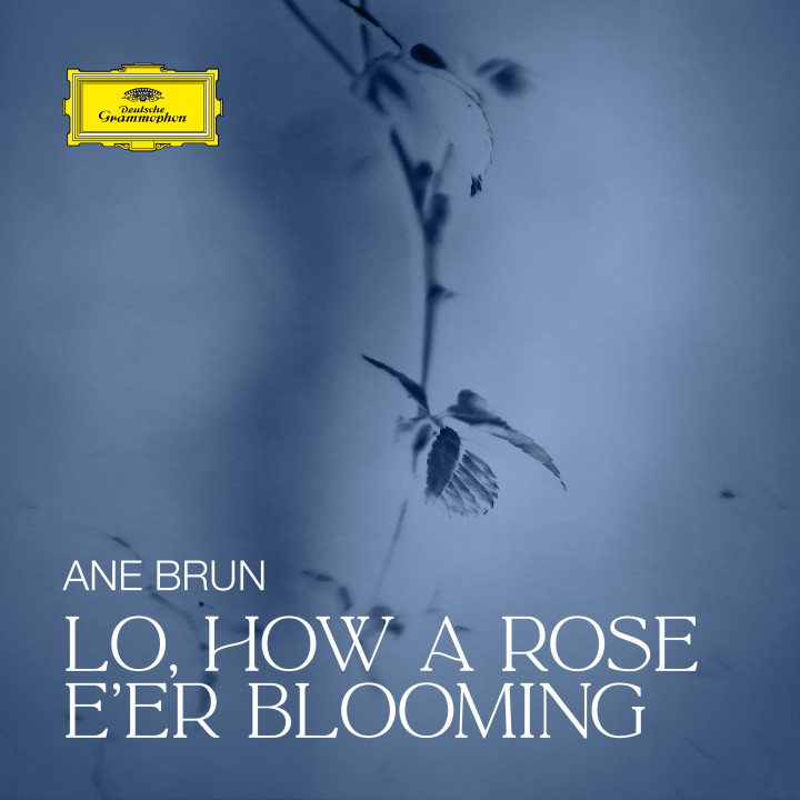 Ane Brun - Lo, How a Rose E'er Blooming Cover